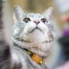 「ペットOK」「足湯」「猫カフェ」。理想のオフィス設備&サービスは?