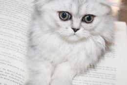 ネコ好きに聞いた、ネコちゃんを愛さずにはいられない3つの理由