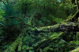 「屋久島」「軍艦島」「小笠原」まだまだあります! 死ぬまでに絶対に行きたい日本の絶景8選