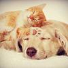 一緒に暮らすなら「犬」「猫」どっち!? 犬派「ひとなつっこい」猫派「ツンデレでかわいい」