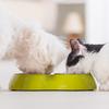 ペットを飼うときに必要な周りへの心遣いって?