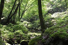 「虫はタンパク源」「竹から水を得る」人気サバイバル番組『MAN vs.WILD』シリーズの役立つ(?)知識5選