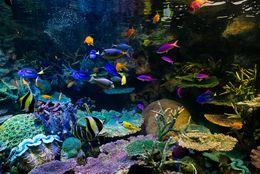 この夏絶対行きたい、 おすすめ水族館ランキング! 1位は「沖縄美ら海」ご当地水族館も健闘