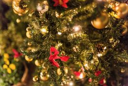びっくり! オーストラリアでは7月にクリスマスを祝うって本当?