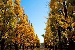 早稲田と慶應ってどっちが頭いい? 一般的イメージは……約7割が◯◯「学業への意識高い」「医学部がある」