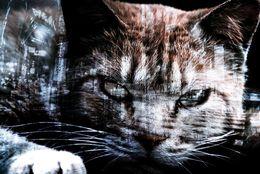 名前が大きく影響? 一番強そうな猫ランキング! 3位ベンガル、2位スフィンクス……。