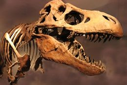 「しずかちゃんに『赤ちゃんをつくろう』」「恐竜時代にメガネを忘れる」のび太の呆れてしまう失敗談5選