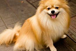 一躍YouTuberの仲間入り! 500万回も再生された「犬の◯◯◯◯動画」とは?