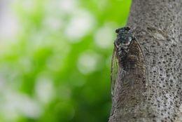「セミ→夏だなあ」「鈴虫→秋だなあ」意外! 虫の鳴き声に季節を感じるのは日本人だけ?