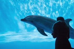 地元民オススメ! デートで行ったら絶対に楽しい関西の水族館4選