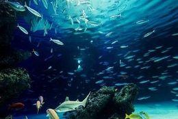 関西カップルにおすすめ! デートで行くと楽しい関西の水族館5選