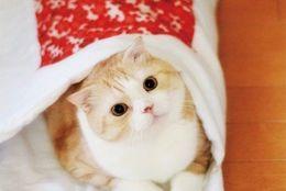ニャンともゆめごこちだニャー!猫のための布団発売中!
