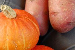 食欲の秋、いまが旬! サツマイモ・マイタケ……スーパーで手に取る際に実践したい、おいしい秋野菜の見分け方