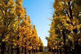 秋といえば紅葉! 東京近郊にあるおすすめ紅葉スポット5選