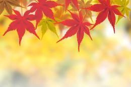 秋ビールってどこが「秋」? 秋ビールが出る理由とその特徴について