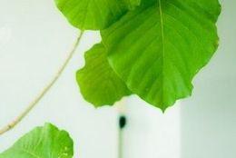 部屋のイメチェンに! 初心者でも育てやすいおすすめの観葉植物6つ