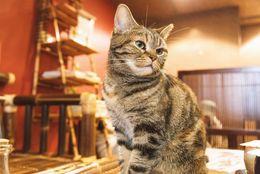癒される! 東京都内のおすすめの「猫カフェ」5選