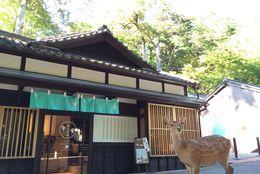 奈良のおすすめデートスポット15選! カップルで行きたい、古都の魅力満載の観光地は?