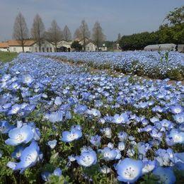 茨城のおすすめデートスポット15選! 都心からもアクセス抜群な定番観光地は?