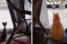 小さくても、大きくなってもかわいいのは変わらない! ネコのビフォーアフター9選