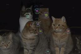 見とれたり、驚いたり・・!9匹の猫たちが初めてシャボン玉を見てる動画がとてもいい