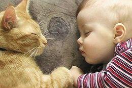 ほっこり姿に胸きゅんっ! 赤ちゃんとネコの仲むつまじいツーショット10選