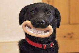 まぬけな顔に笑わずにはいられない! 飼い主もワンちゃんもハッピーになるおもちゃ7選