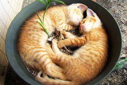 ぎゅうぎゅう押し込められている姿がなんともかわいい! 植木鉢にはまっているネコ 画像8選