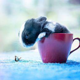 ちっちゃくてフワフワ! 赤ちゃんウサギの成長記録10枚