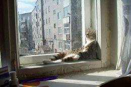 みんな温かいところが大好き! ぬくぬくしているネコ等 画像8選