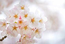 春は片思いの季節! 新生活で恋をしてしまった時に見直したいポイント4つ