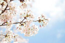 春は恋の季節! 4月のおすすめデートスポット3選