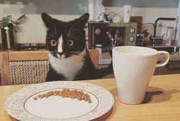 【爆笑】飼い主さんも思わず吹き出す! 表情豊かな猫さん30匹