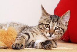 衝撃の動画も! 海外の動物に関する面白ニュース5選