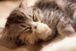 ひょこっとかわいい手がちらり……隙間が大好きなネコの手 画像10選