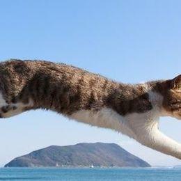 ベストショット! 『飛び猫』写真家が撮影した愛に満ち溢れたネコ 写真12選
