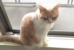 怒ってるの? 怒り顔が魅力的なネコの小雪ちゃん 画像6選