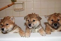 お風呂きら~い! ついついお風呂から逃げちゃうワンコたち5選