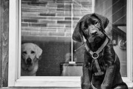 犬の嫉妬もこわい? 飼い主への愛情を抑えきれないワンちゃん 画像7選