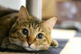 そんな顔でみつめないで! 飼い主さんを引き止めちゃう犬ネコ 画像10枚