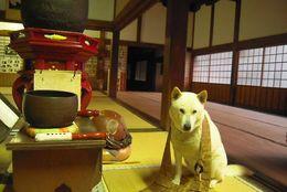 犬なのに住職? 紀州犬のマル住職のかわいいツイート 画像5選