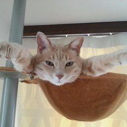 高いところ大好き? キャットタワーを満喫しているネコたち 画像10選
