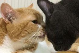 いろんな猫さんが大集合! 「世界猫の日」に投稿されたしあわせ写真8選