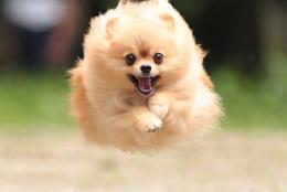 飛び猫に対抗して? ばびゅっと飛んじゃう飛び犬 画像10選