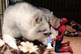 世界のヒーローが! 犬とネコと時々スパイダーマン 画像13選