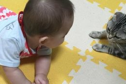 かわいすぎてニヤニヤが止まらない! 「赤ちゃんと猫」の最強コンビ10選