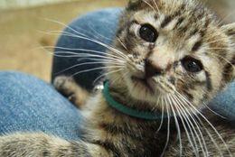 毎月11日は「髭祭り」! 神秘的で愛らしいネコちゃんのおひげ写真9選