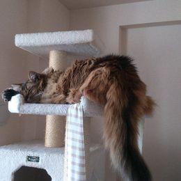 もふもふ感がたまらないっ! かわいすぎるネコのおしり 画像6選