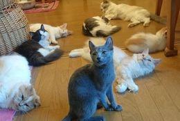 快適温度がいいにゃ! 室内でコロコロくつろぐネコさん達 画像6選