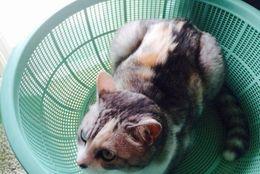 すっぽり収まっちゃう! ぴったち入るネコさんたちに癒される「ザル猫」 画像6選